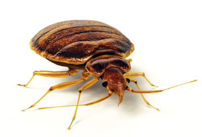Pest Control Liverpool Bedbugs