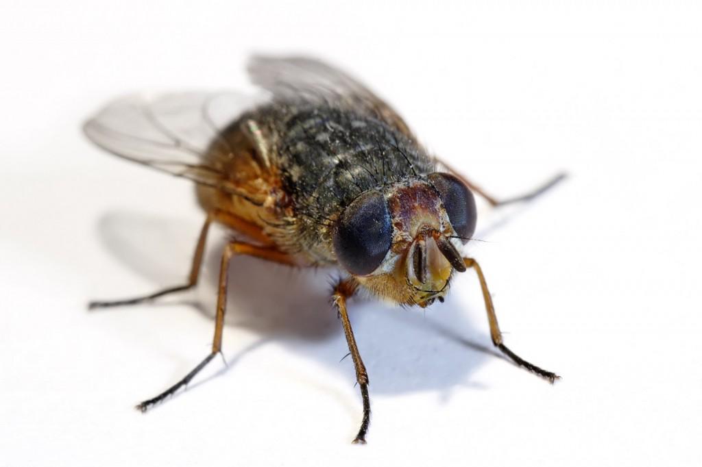 Flies Liverpool
