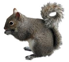 Squirrels Liverpool