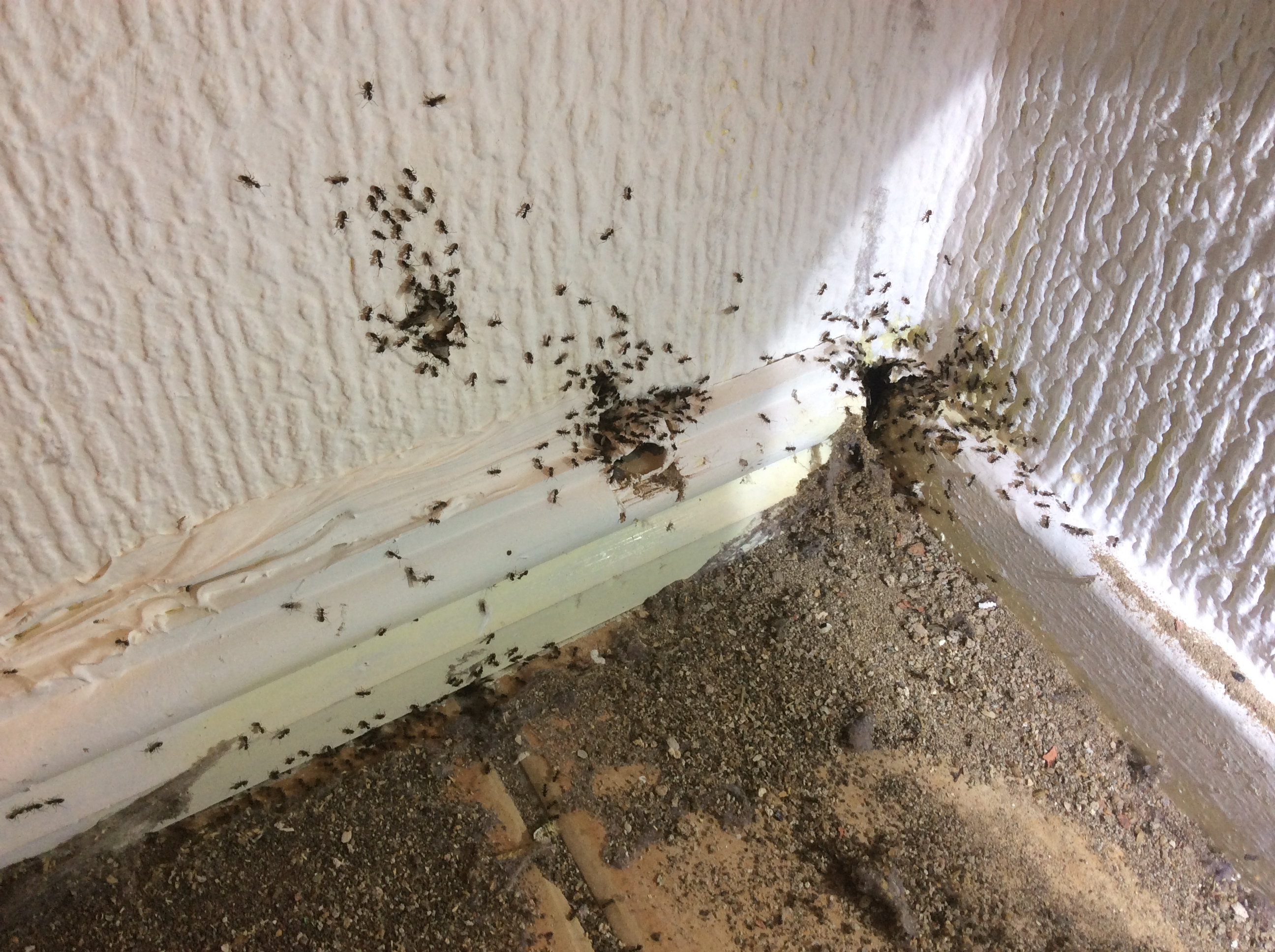 Flying Ants in the Kitchen - MERSEYPEST - Pest Control Liverpool ...
