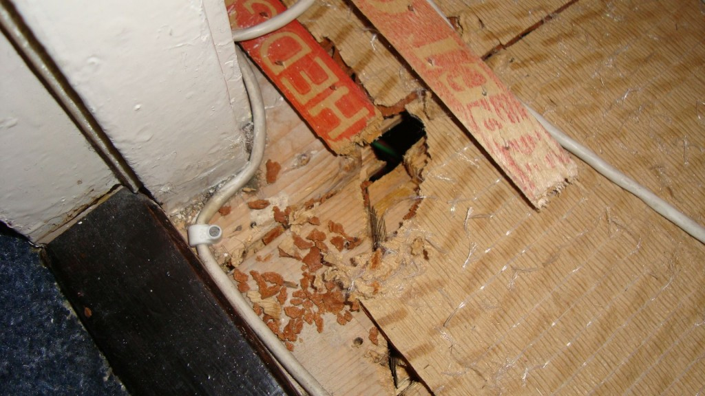 how to clean mouse droppings in garage