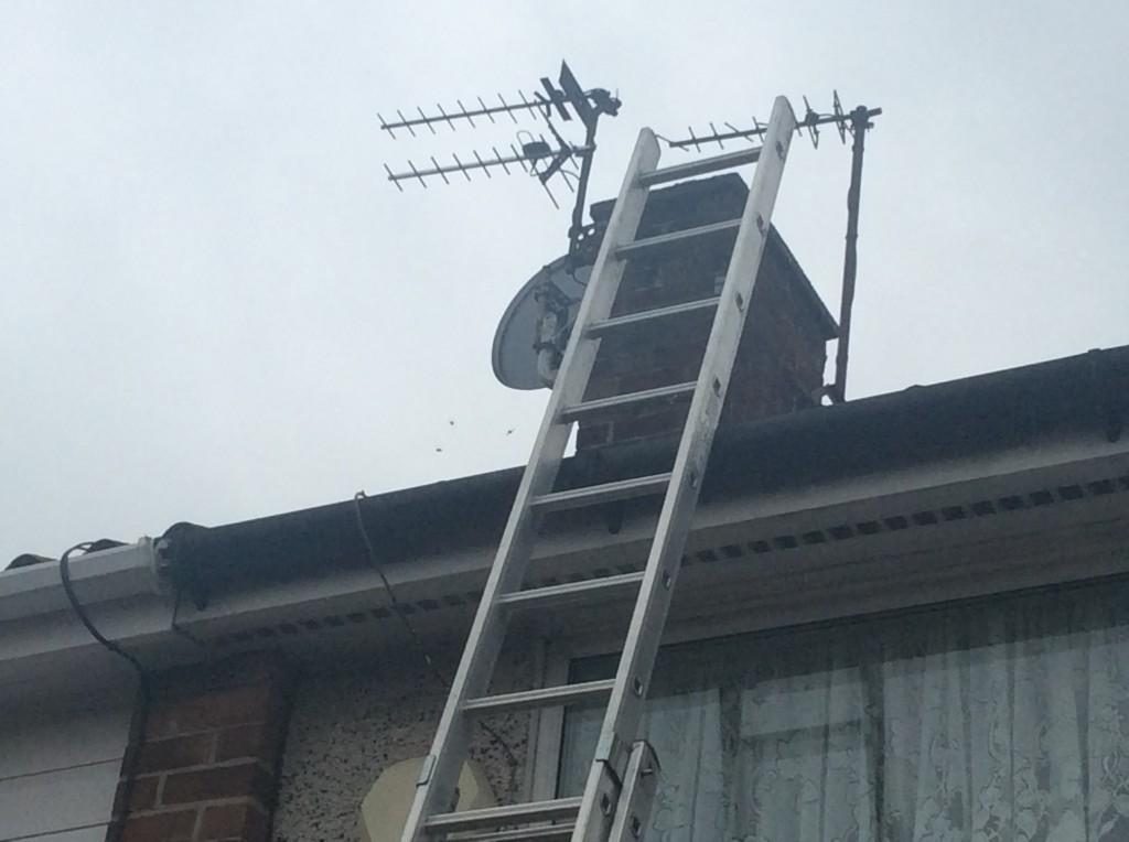 pest control liverpool late wasps
