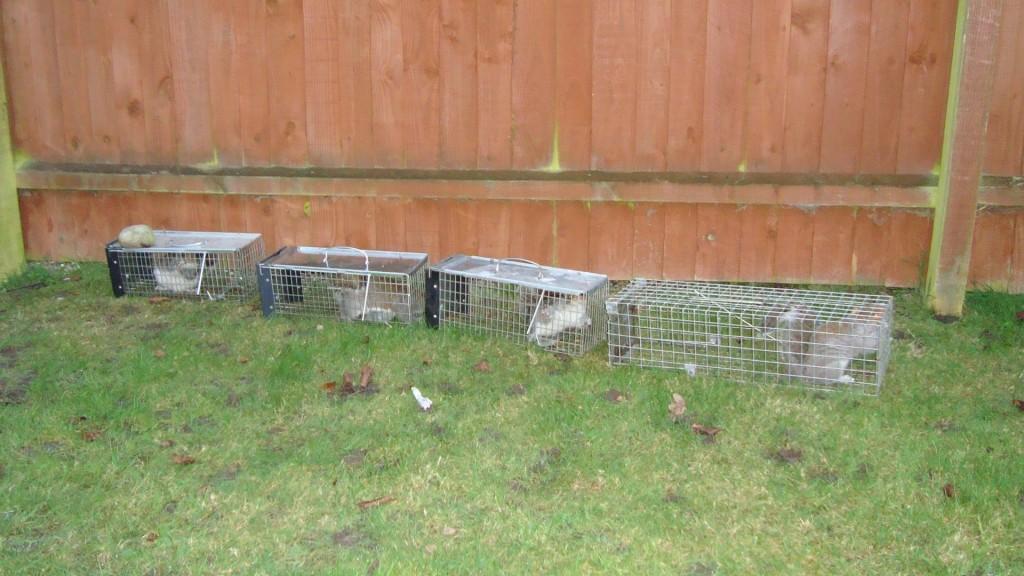 pest control liverpool squirrels