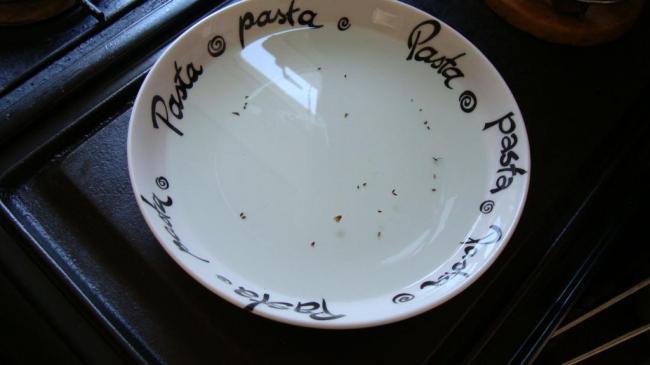 fleas in bowl pest control liverpool