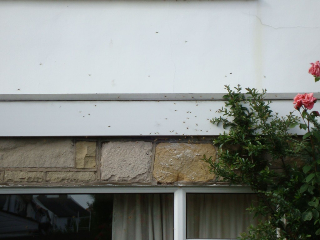 wasps going crazy pest control liverpool
