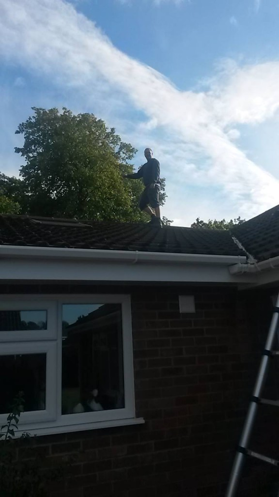 pest control liverpool roof
