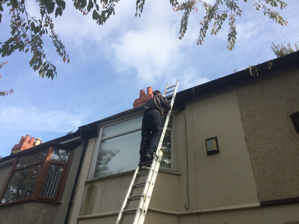 pest control liverpool and wirral