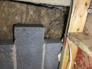 Rat in Extension Roof