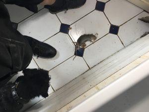 Liverpool Pest Control Dog
