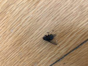 Customer Flies 1