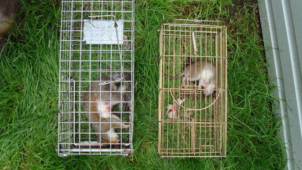 Pest Control Liverpool - MerseyPest
